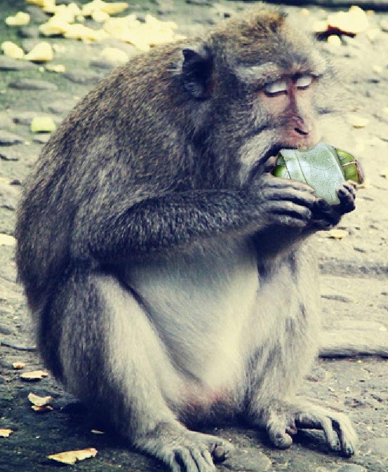 猴子終究要吃檳榔的