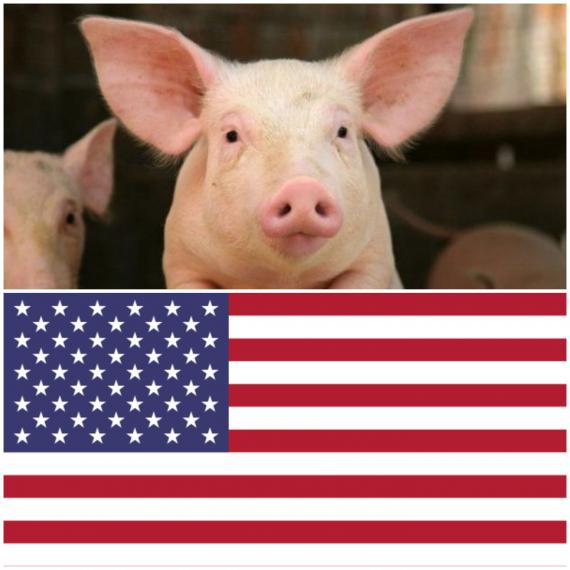 美國的兒孫們都在吃美國萊豬